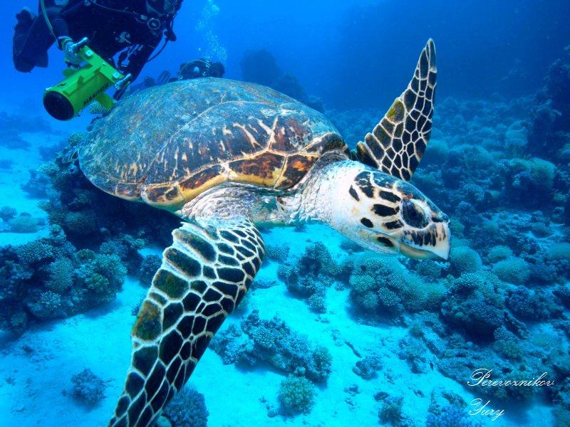Посетить подводный мир красного моря